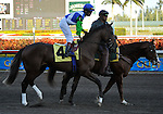 31 January 2009: Nicanor warms up with Edgar Prado before he runs in his first race and finishes a disappointing 11th in a maiden race at Gulfstream Park in Hallandale, Florida.