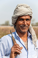 Rajasthan, India.  Rajasthani Farmer with Sickle in his Mustard Field.
