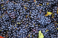 gamay georges duboeuf beaujolais burgundy france
