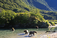 A photo of a coastal Katmai Grizzlies eating salmon in a pool of water. Grizzly Bear or brown bear alaska Alaska Brown bears also known as Costal Grizzlies or grizzly bears Grizzly Bear Photos, Alaska Brown Bear with cubs. Purchase grizzly bear fine art limited edition prints here Grizzly Bear Photo Bear Photos,