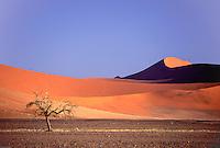 Kalahari Soussuslewi