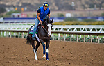 DEL MAR, CA - OCTOBER 30: Talismanic, owned by Godolphin Stable Lessee and trained by Andre Fabre, exercises in preparation for Longines Breeders' Cup Turf at Del Mar Thoroughbred Club on {mothname} 30, 2017 in Del Mar, California. (Photo by Scott Serio/Eclipse Sportswire/Breeders Cup)