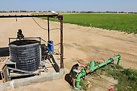 EGYPT, Cairo Alexandria desert road, potato farming in the desert, Daltex Corporation, the round fields are irrigated by pivot circle irrigation with groundwater / AEGYPTEN, Daltex Corporation, Kartoffelanbau in der Wueste, die kreisrunden Felder werden mit Pivot Kreisbewaesserungsanlagen mit Grundwasser bewaessert