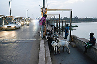 MALI, Kayes, bridge on Senegal river, cattle transport / Brücke über den Senegal Fluss