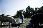 Sustainable Hog Farming