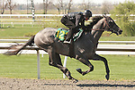 07 April 2011.  Hip #122 Empire Maker - Cosmic Wish colt, consigned by Niall Brennan.
