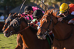 Jockey Jose Lezcano and Star Channel grind out a win in the Florida Sunshine Millions Turf at Gulfstream Park, Hallandale Beach Florida. 01-18-2014