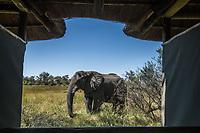 Okavango Delta_elephants