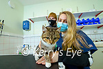 Annie O'Callaghan McGrath's veterinary, Tralee treating a cat she has named Valentina who had her tail trapped in a car door overnight, also in photo is Wendy O'Connor, Animal Help Net Kerry.