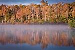 Morning mist, Autumn, Ferguson Lake, ME, USA
