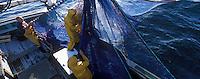 """Europe/France/Bretagne/56/Morbihan/Quiberon : Pêche à la sardine sur le """"Kanedeven"""""""