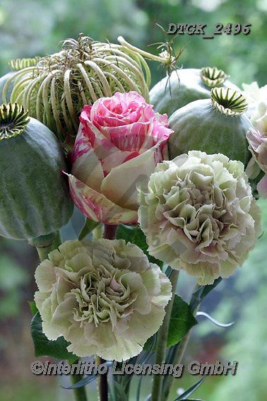 Gisela, FLOWERS, BLUMEN, FLORES, photos+++++,DTGK2496,#f#, EVERYDAY