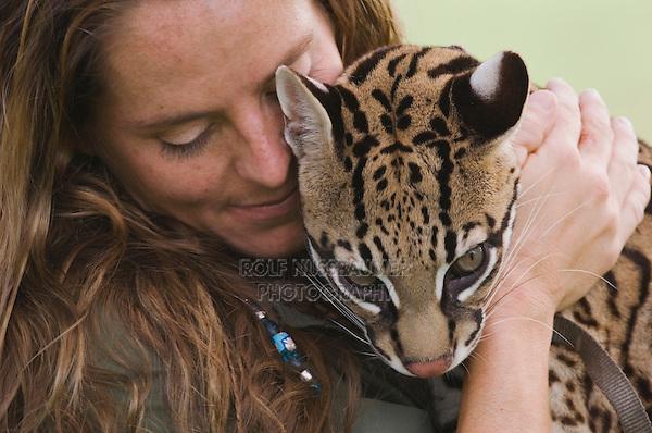Ocelot, Felis pardalis, captive, female with zoo keeper Cindy Hall Survivor Contestant, Welder Wildlife Refuge, Sinton, Texas, USA, Oktober 2006