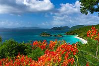 Trunk Bay with Flamboyant flowers<br /> Virgin Islands National Park<br /> St. John<br /> US Virgin Islands