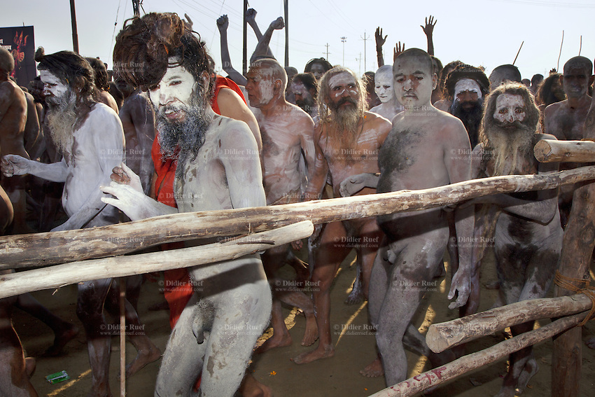 """India. Uttar Pradesh state. Allahabad. Maha Kumbh Mela. Royal bath on Mauni Amavasya Snan (Dark moon). The ritual """"Royal Bath"""" is timed to match an auspicious planetary alignment, when believers say spiritual energy flows to earth. Naga (naked) Sadhus celebrate their joy after taking a dip in Sangam and worship the river Ganges. The Naga Sadhus have their bodies smeared with ashes and are followers of Shiva. The Kumbh Mela, believed to be the largest religious gathering is held every 12 years on the banks of the 'Sangam'- the confluence of the holy rivers Ganga, Yamuna and the mythical Saraswati. In 2013, it is estimated that nearly 80 million devotees took a bath in the water of the holy river Ganges. The belief is that bathing and taking a holy dip will wash and free one from all the past sins, get salvation and paves the way for Moksha (meaning liberation from the cycle of Life, Death and Rebirth). Bathing in the holy waters of Ganga is believed to be most auspicious at the time of Kumbh Mela, because the water is charged with positive healing effects and enhanced with electromagnetic radiations of the Sun, Moon and Jupiter. In Hinduism, Sadhu (good; good man, holy man) denotes an ascetic, wandering monk. Sadhus are sanyasi, or renunciates, who have left behind all material attachments. They are renouncers who have chosen to live a life apart from or on the edges of society in order to focus on their own spiritual practice. The significance of nakedness is that they will not have any worldly ties to material belongings, even something as simple as clothes. A Sadhu is usually referred to as Baba by common people. The Maha (great) Kumbh Mela, which comes after 12 Purna Kumbh Mela, or 144 years, is always held at Allahabad. Uttar Pradesh (abbreviated U.P.) is a state located in northern India. 10.02.13 © 2013 Didier Ruef"""