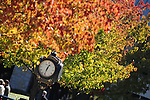 18 October 2009: The vibrant fall colors of Keeneland in the autumn make for spectacular photographs and a pleasant weekend outing for race fans.