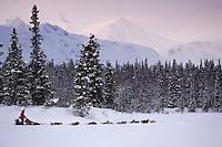 Doug Swingleys sled dog team on trail near Finger Lake Chkpt 2006 Iditarod Finger Lake Alaska Winter
