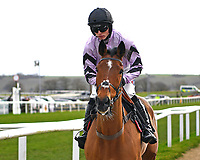 Moabit ridden by Harry Cobden and trained by Paul Nicholls goes down to the start of The SW Catering Chase   during Horse Racing at Plumpton Racecourse on 10th February 2020