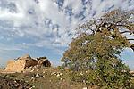 T-018 Cyprus Oak in Beth El