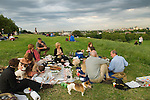 Dog owners with their pet dogs a summers evening alfresco picnic, Primrose Hill London Middle class Londoners UK 2008 2000s