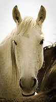 Hello Beautiful!  - Wild Horse - Utah