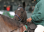 """October 04, 2014: Leigh Court and jockey Gary Boulanger win the 34th running of The Thoroughbred Club of America Grade 2 """"Win and You're In Filly & Mare Sprint Division"""" $20,000 at Keeneland Racecourse.  Candice Chavez/ESW/CSM"""