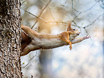 Squirrels in natures studio pose for photographer Doris Doerfler-Asmus