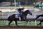 OCT 26 2014:Living the Life, trained by Gary Mandella, exercises in preparation for the DraftKings Breeders' Cup Filly & Mare Sprint or Turf at Santa Anita Race Course in Arcadia, California on October 26, 2014. Kazushi Ishida/ESW/CSM