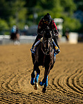 MAY13, 2021:  Kentucky Derby winner Medina Spirit gallops with Humberto Gomez in preparation for the Preakness Stakes at  Pimlico Race Course in Baltimore, Maryland on May 13, 2021. EversEclipse Sportswire/CSM