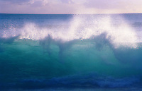 Beautiful blue wave about to break at Makaha beach, Island of Oahu