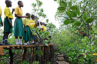 KENIA Mombasa , mangrove aforestation at the coastal belt for climate and coast protection and protection of sea erosion , school children at excursion in mangrove forest / KENIA, Projekt Kuestenschutz in Kuestenregion bei Mombasa , Ort Majaoni , Kinder einer Schulklasse der Majaoni Primary School auf einem Lehrpfad im Mangrovenwald waehrend einer Schulexkursion