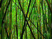 A pattern of fallen bamboo tree trunks above the middle of the Pipiwai Trail at Haleakala National Park, Maui.