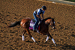 November 5, 2020: Spanish Loveaffair, trained by trainer Mark E. Casse, exercises in preparation for the Breeders' Cup Juvenile Fillies Turf at Keeneland Racetrack in Lexington, Kentucky on November 5, 2020. John Voorhees/Eclipse Sportswire/Breeders Cup/CSM