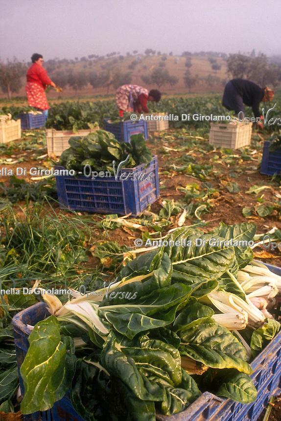 Contadini durante il loro lavoro. Farmers during their work....