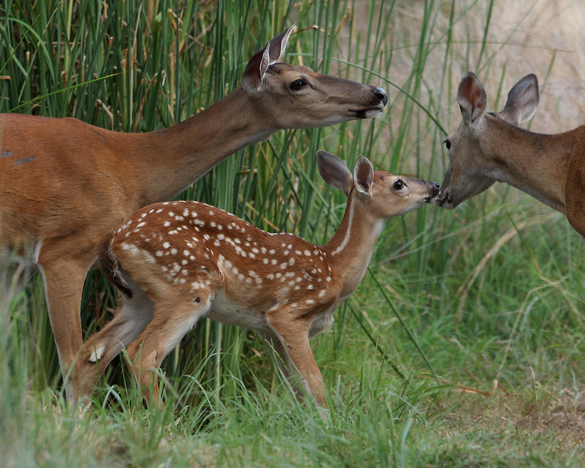 """Baby fawn as the """"center of attention"""""""