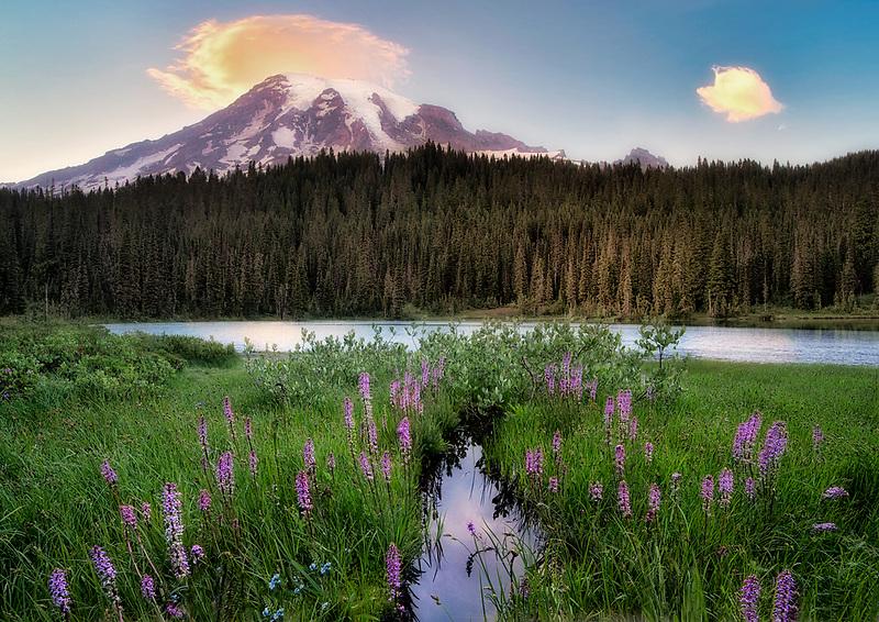 Reflection Lake with wildflowers (Elephants Head Pedicularis groenlandica) and Mt. Rainier. Mt. Rainier National Park, Wasghington