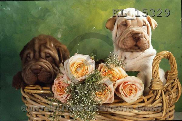 Interlitho, Alberto, ANIMALS, dogs, photos, 2 shar peis, basket(KL15329,#A#) Hunde, perros