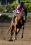 February 06, 2021: Concert Tour with Joel Rosario (pink) defeats Freedom Fighter and Drayden Van Dyke to win the San Vicente Stakes at Santa Anita Park in Arcadia, California on February 6, 2021. Evers/Eclipse Sportswire/CSM