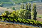 Italien, Piemont, Weinberge bei Sala Monferrato | Italy, Piedmont, vineyards around Sala Monferrato
