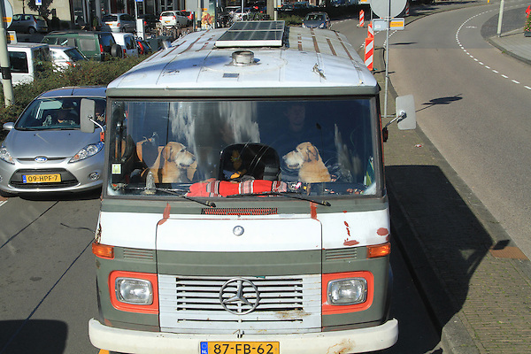 Dogs in a camper in Haarlem, Netherlands .  John offers private photo tours in Denver, Boulder and throughout Colorado, USA.  Year-round. .  John offers private photo tours in Denver, Boulder and throughout Colorado. Year-round.
