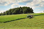 Mennonite boy mowing hay for silage, Union County, PA. Near Mazeppa.