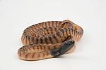 Black-Headed Python (Aspidites melanocephalus) on white background