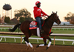 Starship Jubilee, trained by trainer Kevin Attard, exercises in preparation for the Breeders' Cup Mile at Keeneland Racetrack in Lexington, Kentucky on November 4, 2020.