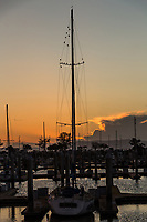 Birds cling to the upper rigging of a sail boat - silhouettes on a late winter afternoon.