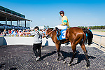 OLDSMAR, FL - JANUARY 21: The Money Monster #3 (blue cap), ridden by Edgard J. Zayas, enters the winners circle after winning the Pasco Stakes on Skyway Festival Day at Tampa Bay Downs on January 21, 2017 in Oldsmar, Florida. (Photo by Douglas DeFelice/Eclipse Sportswire/Getty Images)