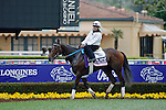 ARCADIA, CA - OCT 31: Daddys Lil Darling, owned by Normandy Farm and trained by Kenneth G. McPeek, walks through the paddock on the way to the track to exercise in preparation for the Breeders' Cup 14 Hands Winery Juvenile Fillies at Santa Anita Park on October 31, 2016 in Arcadia, California. (Photo by Zoe Metz/Eclipse Sportswire/Breeders Cup)