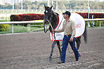 Hymn Book on his way back to the barn with groom after winning the Donn Handicap(G1) at Gulfstream Park. Hallandale Beach, Florida. 02-11-2011