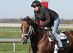 April 11, 2015: Toyota Blue Grass winner, Carpe Diem jogs on the main track at Keeneland race course.   Candice Chavez/ESW/CSM