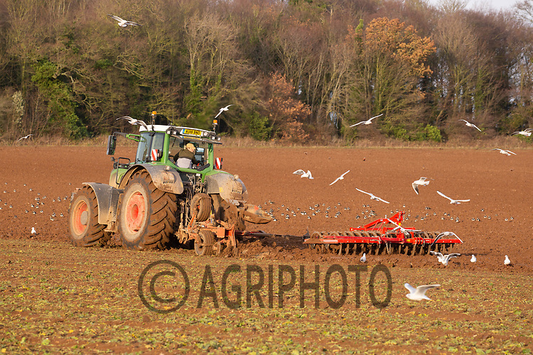 Ploughing land straight after lifting sugar beet<br /> ©Tim Scrivener Photographer 07850 303986<br />      ....Covering Agriculture In The UK....