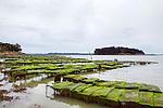 Gulf of Morbihan at low tide Morbihan, France.